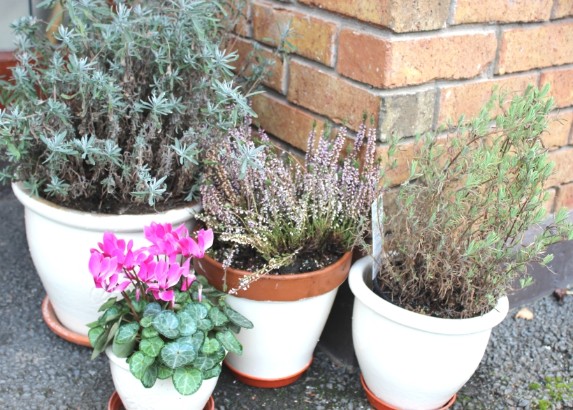 Easy to painted pots to brighten up any space