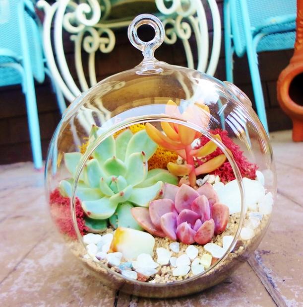 Make your own terrarium