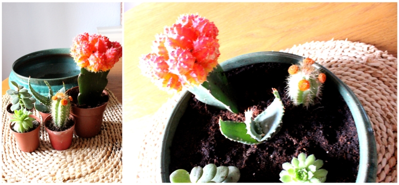 Decorating with plants - A bowl of cacti - so pretty