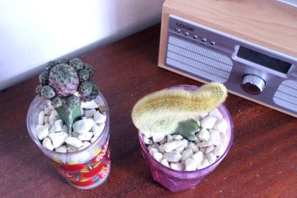 Decorating with plants - A glass of cactus