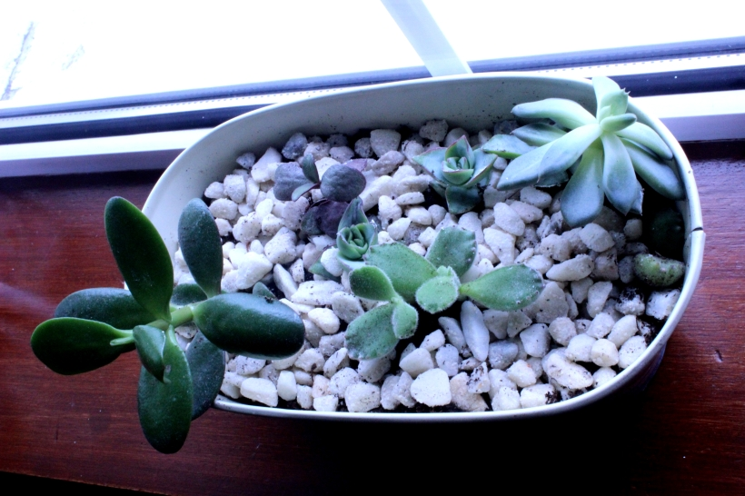Decorating with plants - Succulents